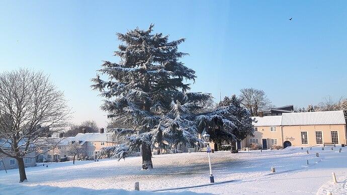 c Jane Ford - Lammas Green in the snow 20180228_074928