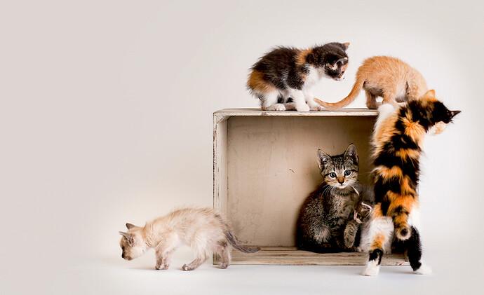cat-fest-beckenham